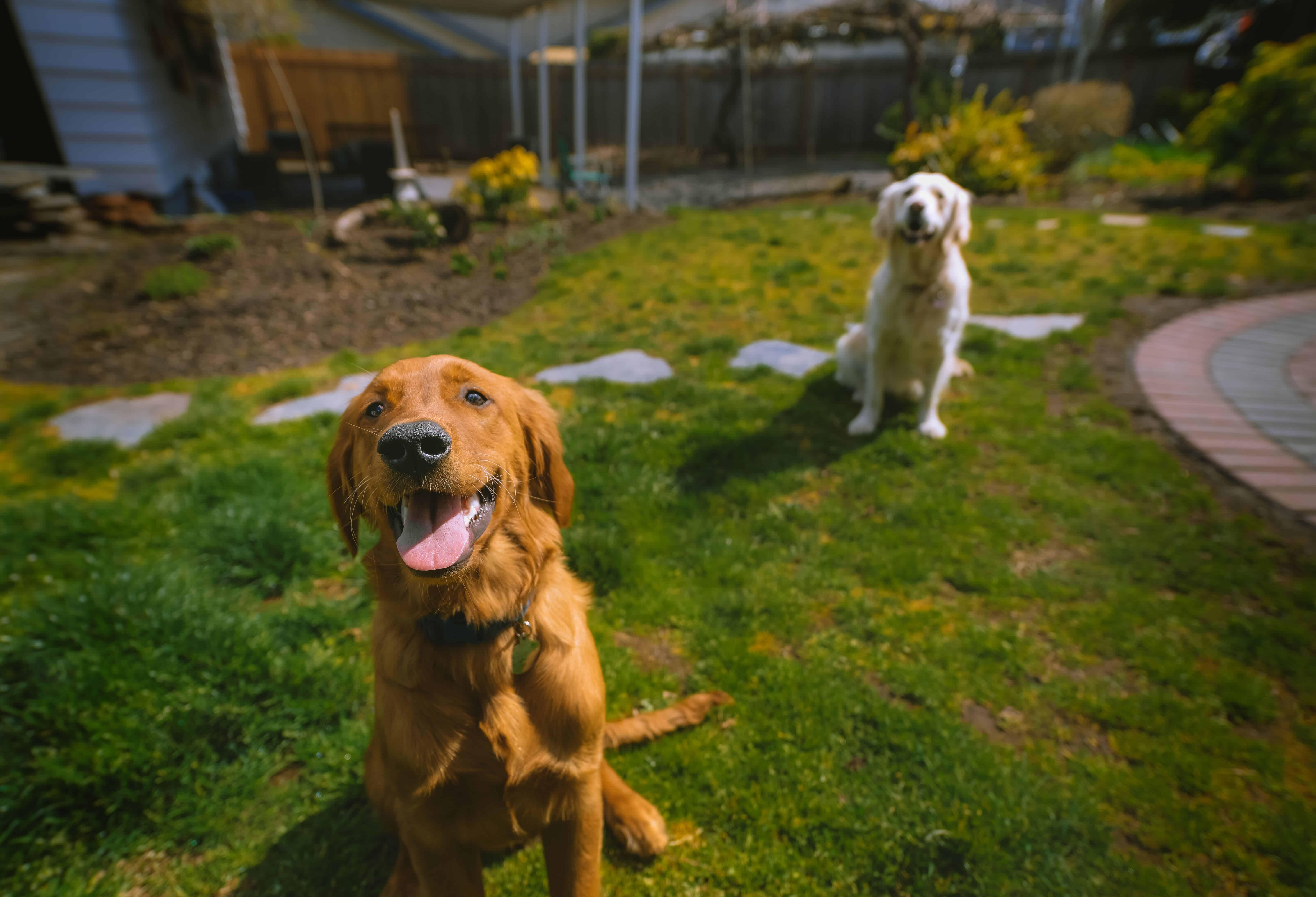Studio Pups Austin Herr